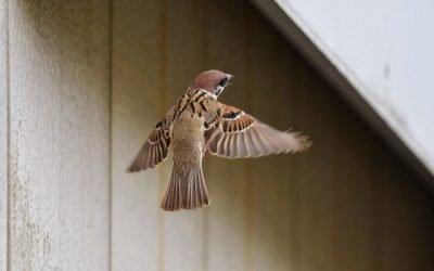 Sparrows Fall