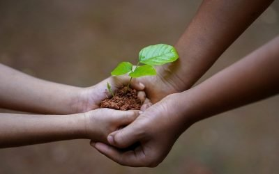 The Hands, the Dirt, the Tree